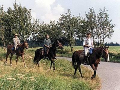 Medium horse riding